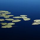 Nature's Abstract - Floating Lily Pads On River by Debbie Oppermann