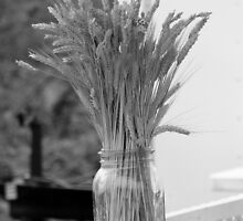 Wheat in a Jar by doubleHimages