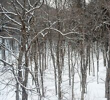 woodland snow scene by photoeverywhere