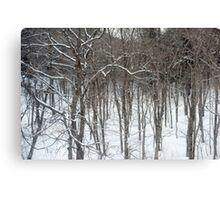 woodland snow scene Canvas Print