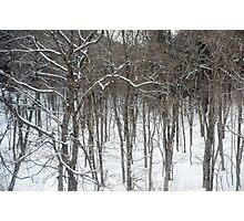 woodland snow scene Photographic Print