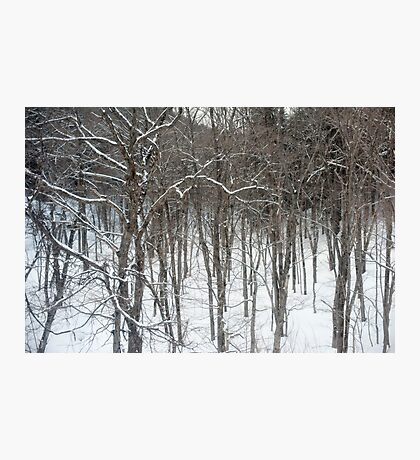 woodland snow scene Photographic Print