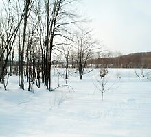 winter landscape by photoeverywhere