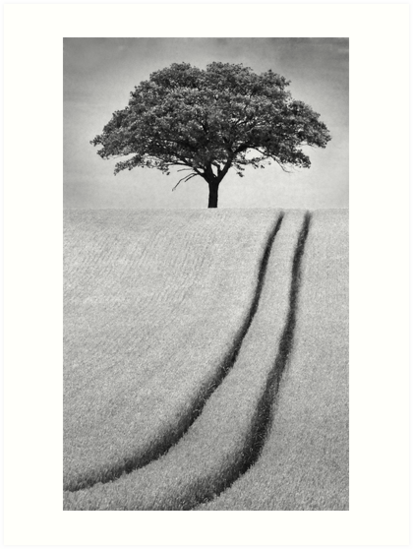 The Tree by Patricia Jacobs CPAGB LRPS BPE4