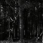 In the Deep Dark Forest by Nigel Bangert
