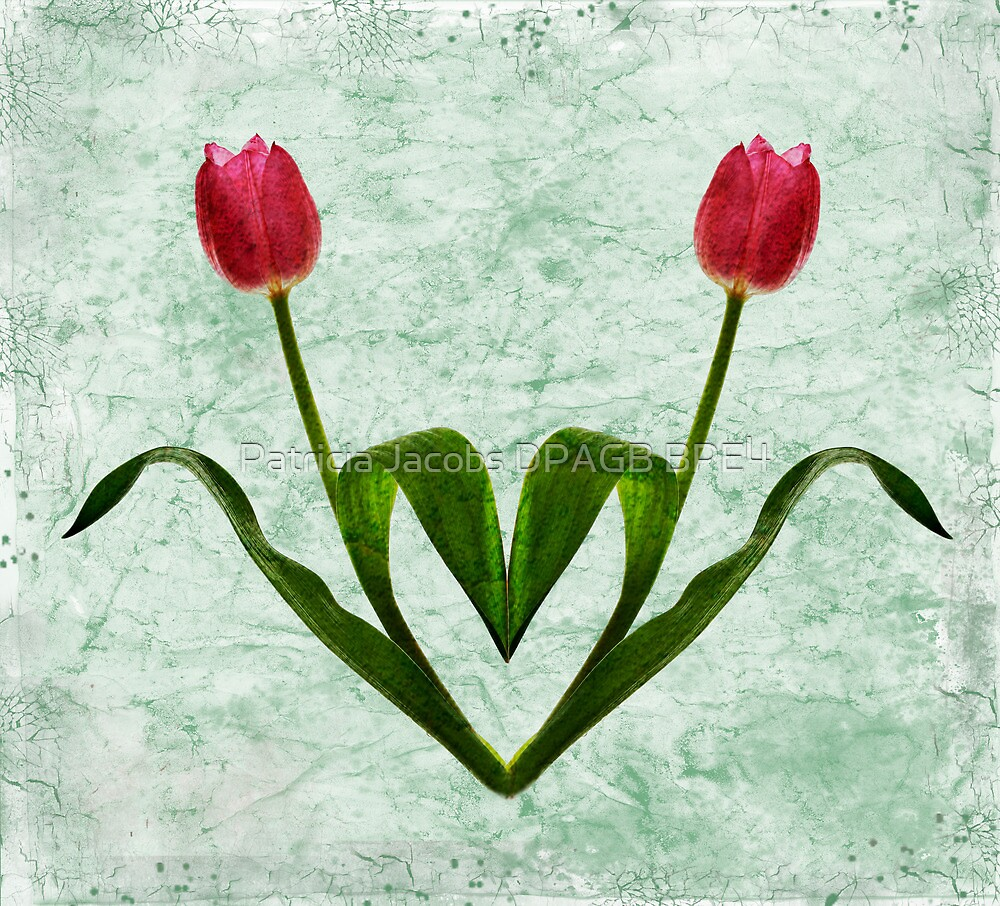 Tulip Heart by Patricia Jacobs CPAGB LRPS BPE4