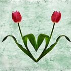 Tulip Heart by Patricia Jacobs CPAGB LRPS BPE3