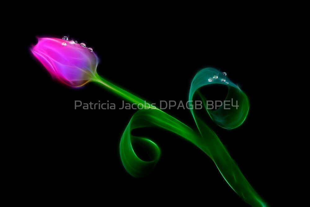 Pink Tulip by Patricia Jacobs DPAGB LRPS BPE4