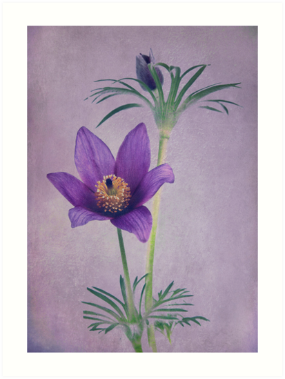 Easter Flower by Patricia Jacobs DPAGB LRPS BPE4