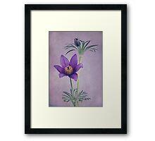 Easter Flower Framed Print