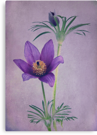 Easter Flower by Patricia Jacobs CPAGB LRPS BPE3