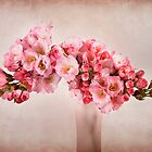 Pink Blossom by Patricia Jacobs CPAGB LRPS BPE3