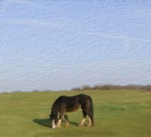 Ponies on Harlow Common by Nigel Bangert