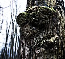 Old man of the Woods by threeblackdots