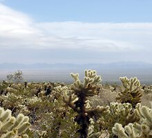 Cholla Cactus Garden Vista by photoeverywhere