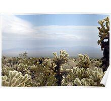 Cholla Cactus Garden Vista Poster