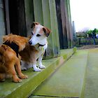 Goochey and Lobito in the oratory Gardens , Liverpool Anglican Cathedral  by Debra Kurs