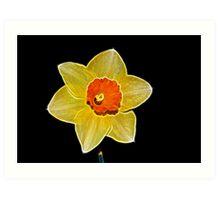 Fractalius Daffodil Art Print