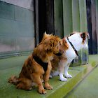 Goochey and Lobito ....on steps og Oratory by Debra Kurs