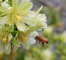 Bee in flight by LeJour