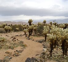 Cactus footpath by photoeverywhere
