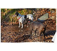 Terrier Twosome Poster