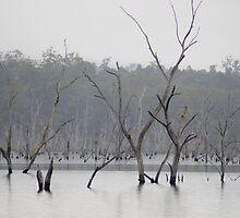 lifeless landscape by photoeverywhere