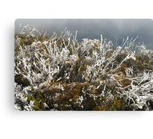 frost winter plants Canvas Print
