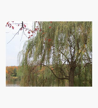 Under The Willow Photographic Print