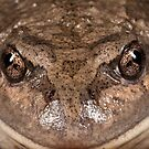 Happy Frog by Natalie Ord