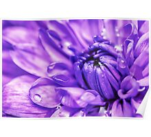 Purple Abstract Flower Poster