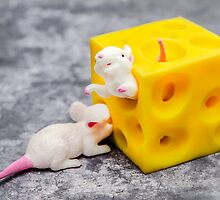 Mice and Cheese by MMPhotographyUK