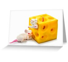 Mice on Cheese Greeting Card