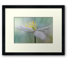 Gorgeous Wood Anemone... Framed Print