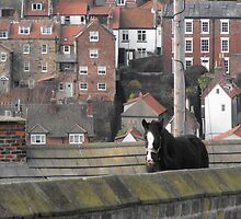I've heard of a reindeer on the roof but............... by alanf1