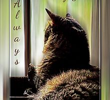 Feline Missing You Always by Terri Chandler