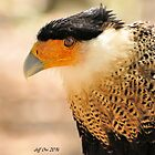 Northern Crested Caracara by Jeff Ore