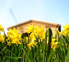 Alexandra Palace Daffodils 1 by Jessica Reilly