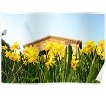 Alexandra Palace Daffodils 1 Poster