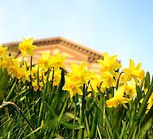 Alexandra Palace Daffodils 2 by Jessica Reilly