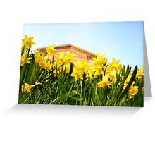 Alexandra Palace Daffodils 2 Greeting Card