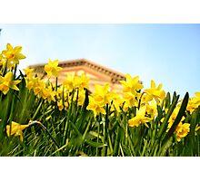 Alexandra Palace Daffodils 2 Photographic Print
