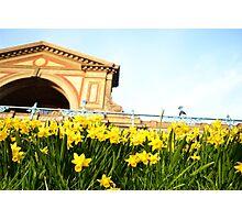 Alexandra Palace Daffodils 3 Photographic Print