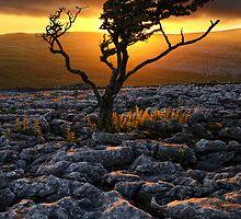 Lone Tree by Mark Sykes