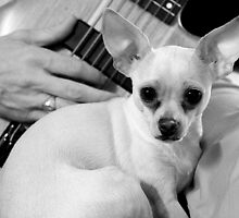 Chihuahua and the Nostalgia Message  by Corri Gryting Gutzman
