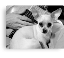 Chihuahua and the Nostalgia Message  Canvas Print