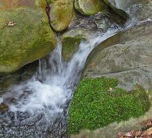 Swanson Creek by David Chesluk