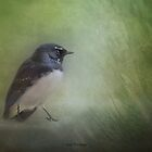 Willy wagtail by Jan Pudney