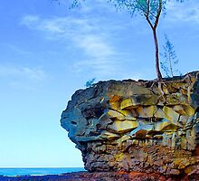 Rocks & Bush, Lamaha'i Beach, Kauai by Thomas Barber