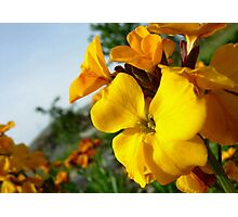 Yellow flowers Photographic Print
